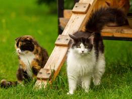 В Ирпене общество «Отважных» установило третий домик для кошек