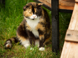 Товариство «Відважних» узялося опікуватися безпритульними тваринами в Ірпені (відео)
